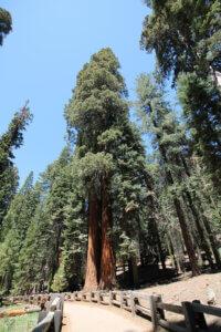 Sequoya Park